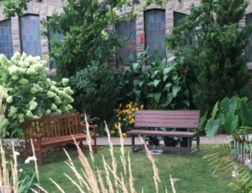 Creating a Healing Meditation Garden – Part Two