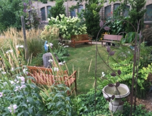 Creating a Healing/Meditation Garden – Part One